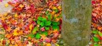 TrendRaider OktoberBox Farbenspiel