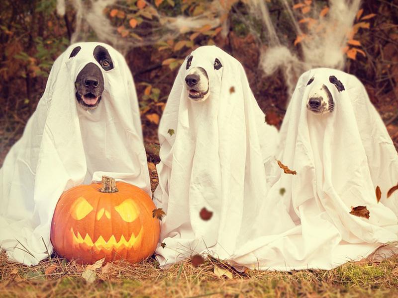 Halloween Hundekostüme von Horror-Shop.com